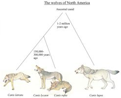 The Wolves of North America by Dark-Hyena