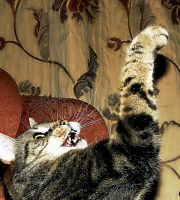 Look!! I can do The Thriller by Nobodies-nobody