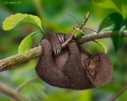 Little Mocha and a Bug,  Baby sloth by Psithyrus