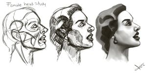 female head study by victter-le-fou