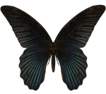 E-S Butterfly III by Elevit-Stock