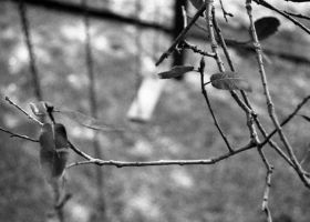 its a twig by KArtWorks