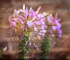 Pretty flowers with textured overlays by Seralunai