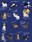 Doctor Who Regenerations Cats by allissajoanne4