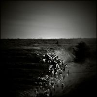 Going Home #2 by AlexandruCrisan