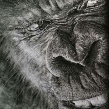 Gorilla, charcoal (close up) A4 by Helsartpage