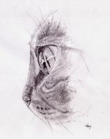 Tabby Cat Pencil by Martin-Lyne