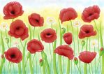 Poppies by DreamyNaria