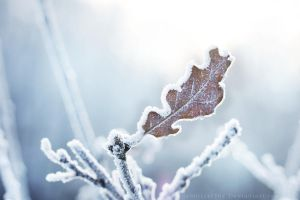 A Song of Frost by Schnitzelyne