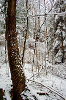 Winter Forest Stock 39 by AreteStock