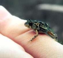 Spring - Baby frog by RainbowCartilage