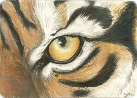 Tiger's Eye ACEO by rockpainter