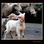Mary has a little lamb by Hermetic-Wings