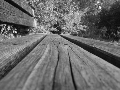 bench in the woods by Abios77