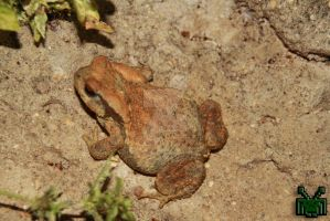 Toad by Nostromo1986