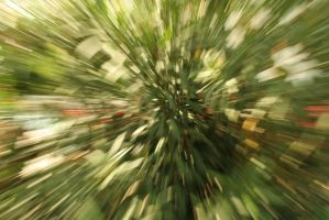 zoom by adolina