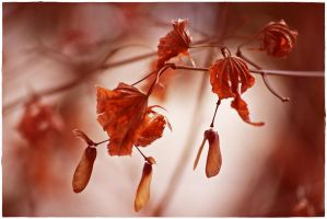 wilted leaves... by wildtea