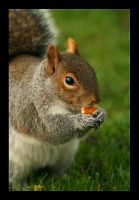 Squirrel - Regent Park by BlueSem