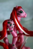 TAF Hollyberry by Cuddlyparrot