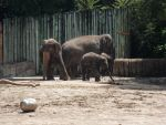 More Elephants by jenniferhl72