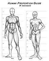 Proportions by AlenaLane