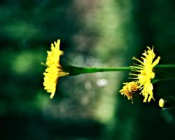 yellow-green by rencee
