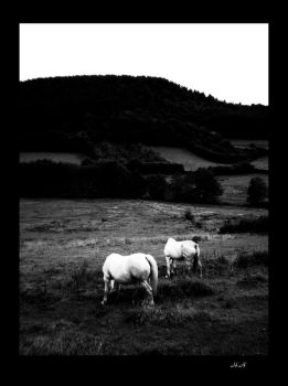 Horses White beyond black by wolfandco