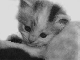 little kitten by sketchpuppy