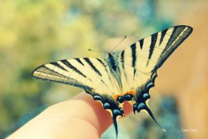 Butterfly by LuizaLazar
