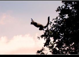 Leap of Faith by lomoboy