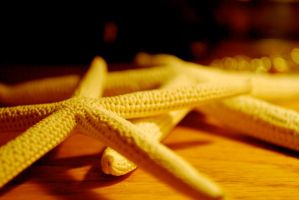 Starfish by JAHpants
