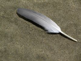 Feather 6 -- Sept 2009 by pricecw-stock