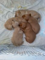 Puppies-3 Weeks Old by FlirtingWithInsanity