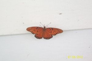 Butterfly on A Hot Porch by PuffyDearlySmith