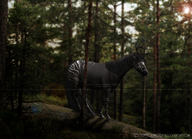 Shadow's Pride [COMM] by CoutureEquineDesigns