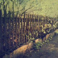 Fence by Amalus