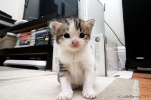 Big Camera, Small Cat by escape-is-at-hand
