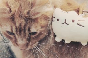 Kitty and Plush by apparate