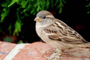 Finch Close up by winterface