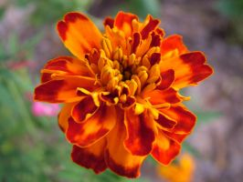 Flower 14 by todds201