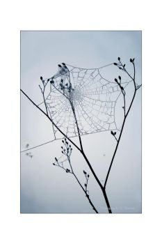 Winter's Web by maxine