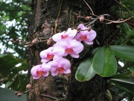Orchids by Dreyco