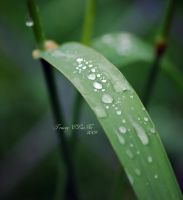Tears of the Gods by ELaiNes-DarkRoom