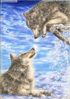 playful winter wolves by shygraywolf