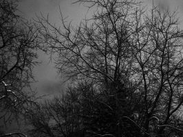 Gray Winter Trees by GhostGarden