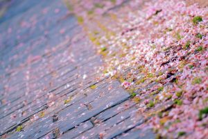 Pink streets. by sergiou12