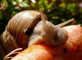 Big Snail on Carrot - Portrait by TheFunnySpider