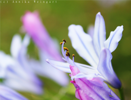Flower by time-photography