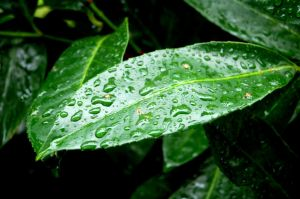 Watered Leaf by YesimMisey123