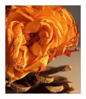 Dead Rose On Cone by TTr2